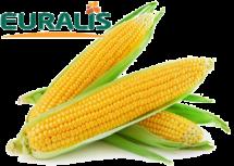 tonnaplus_corn_euralis