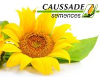 tonnaplus_caussade_sunflower