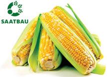 tonnaplus_corn_saatbau