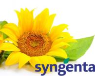 tonnaplus_sunflower